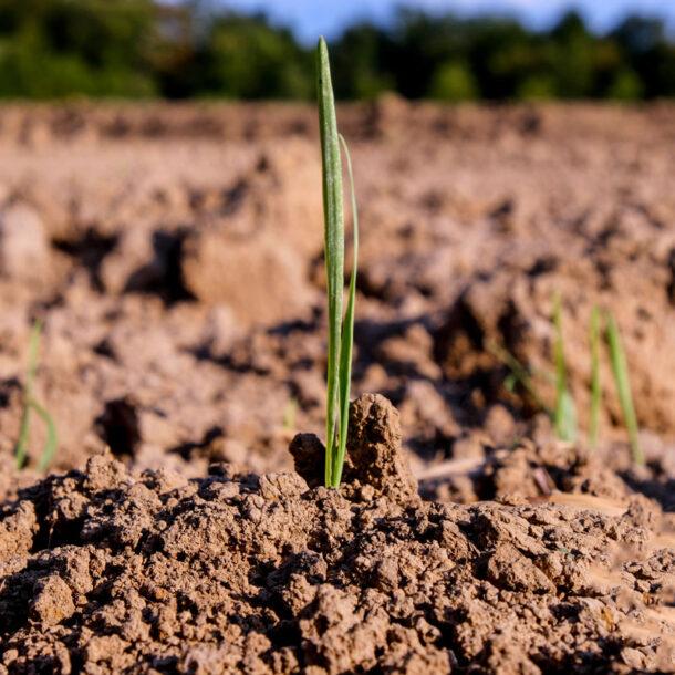 Böden in der Landwirtschaft als CO2-Senke